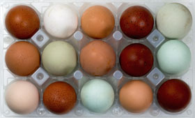 A tray of free range organic eggs