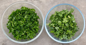 Massaged kale on the left and unmassaged kale the right