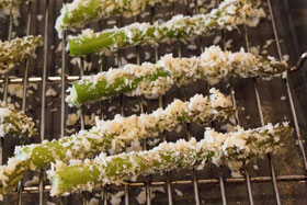 Asparagus spears coated in cheesy breadcrumbs