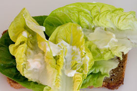 A light coating of mayonnaise is added to the lettuce leaves